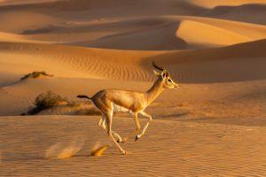 Emirates lucha contra el tráfico ilegal de animales